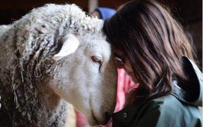 Vier het leven: offerdieren in de Bijbel