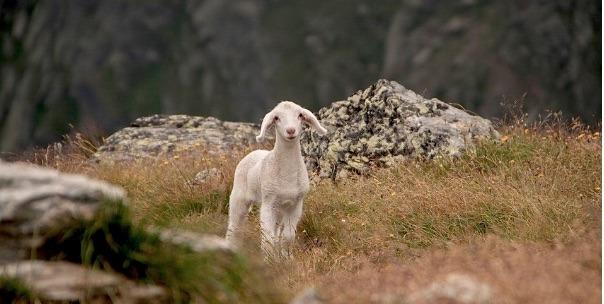 Vier het leven: Jezus is de Goede Herder